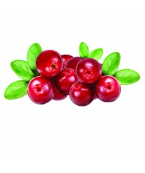 Cranberry Extract - Salud Urinaria